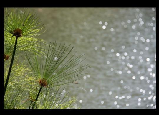 Fotografia de Sebatian Costabile - Cursos de fotografía y video presenciales y a distancia