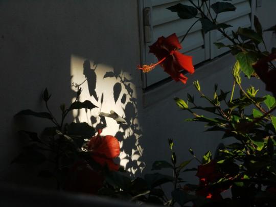 Foto Claudia de la fuente del curso de fotografía Online