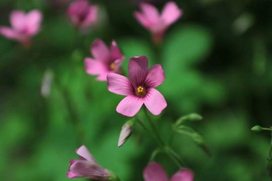 Foto de Natalia Brant del curso de fotografia nivel 1 - Practica en el botánico